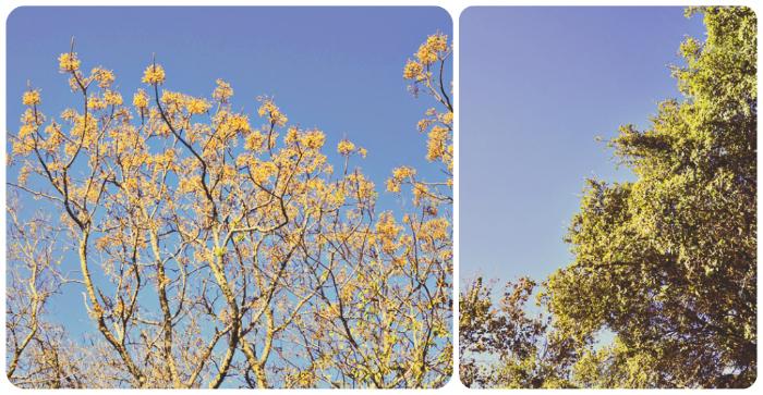 Blue skies collage